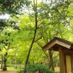 京都駅から下鴨神社へのアクセス!行き方のおすすめは?