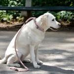 犬についたひっつき虫の取り方!簡単な方法はどれ?