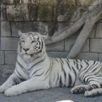 東武動物公園の料金!割引のおすすめはどれ?