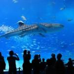 美ら海水族館の料金!割引クーポンのおすすめはどれ?