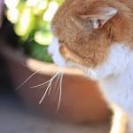 野良猫が車のボンネットに乗る!!対策はどうしたらいいの?