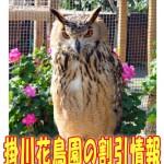 2017年度|掛川花鳥園の料金!割引クーポンのおすすめは?